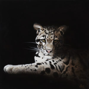 Rhu (Clouded Leopard)