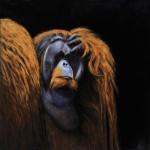 Rudi (Sumatran-Bornean Orangutan)