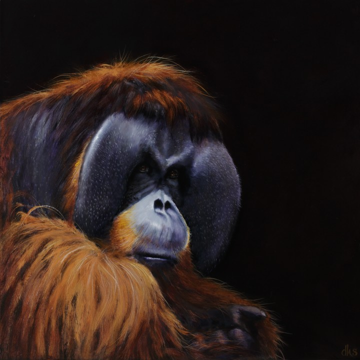 from the Houston Zoo, 24 x 24, oil on wood panel, 2016,