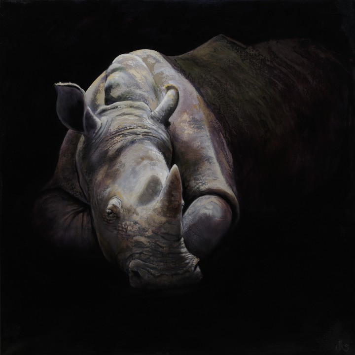36 x 36 oil on canvas, 2016, a white rhino