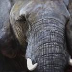 Anna (African Elephant)