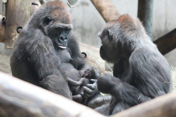 Barika & Baby & Kivu web
