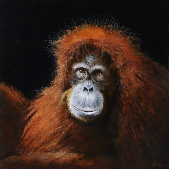 female orang from the Houston Zoo.  oil on wood panel, 16 in x 16 in x 1.5 in, 2015